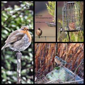 photo-bird 210