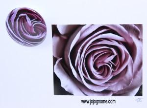 rose_pink_web